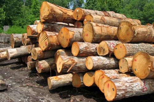 معرفی انواع چوب در صنعت مبل